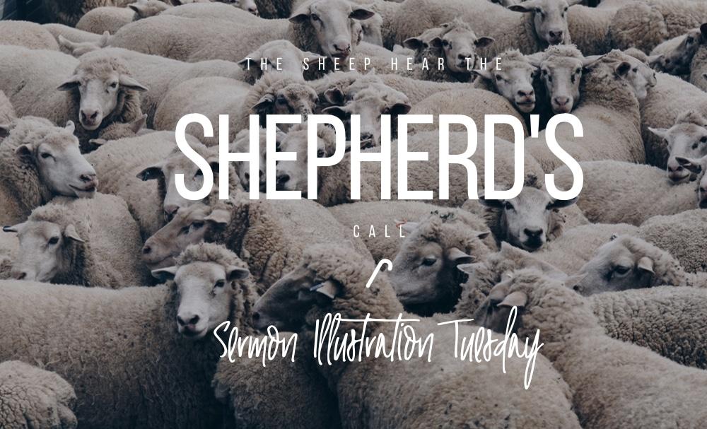 The Sheep Hear the Shepherd's Call: Sermon Illustration Tuesday